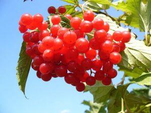 蔓越莓的6種功效與副作用(第1種最多人想問)