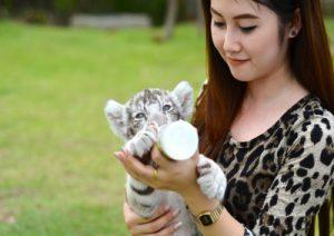 iHerb貓咪營養補充-是否該給你的寵物吃保健食品