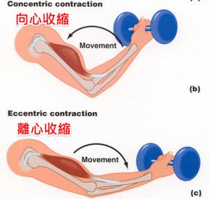 運動後肌肉酸痛的原因(7招快速復原)