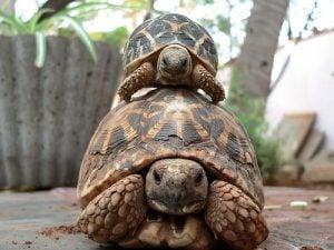 乌龟为何长寿及基因的大发现