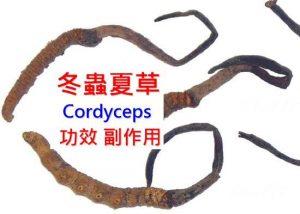 cordyceps-benefits-side-effects