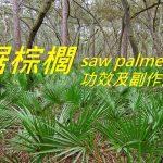 鋸棕櫚的4種功效及副作用(7點使用禁忌要留意)