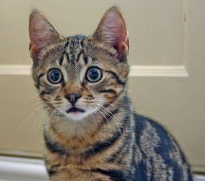貓咪為何要結紮?何時該絕育
