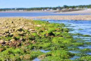 螺旋藻(藍藻)的10種功效及副作用(第1種最常推薦)