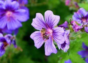 蜂膠的5種功效及副作用(4種禁忌要注意)