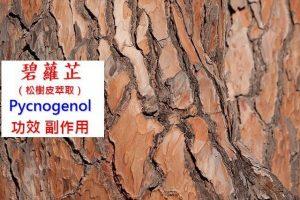 pycnogenol-pine-bark-extract-benefit