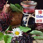 接骨木(莓果)的4種功效及副作用(4點使用禁忌要小心)