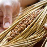 納豆的4種功效與副作用(第4種令人驚訝)