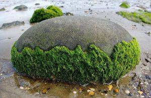綠藻(小球藻)的5種功效及副作用 (第1種最多人想問)