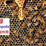 蜂膠的8種功效及副作用(4種禁忌要注意)