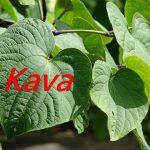卡瓦胡椒的3種功效及副作用(7點使用禁忌要留意)