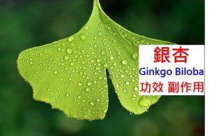 ginkgo-biloba-benefit