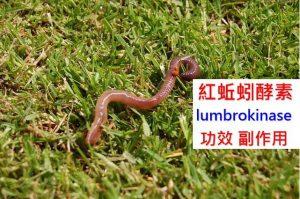 lumbrokinase-benefits-side-effects