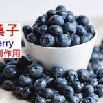 山桑子的8種功效及副作用(9點使用禁忌要小心)