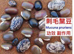 mucuna-pruriens-benefits-side-effects