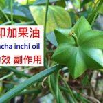 印加果油的5種功效及副作用(3點使用禁忌請小心)