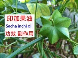 sacha-inchi-oil-benefits-side-effects