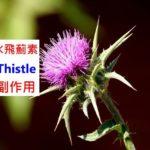 奶薊的7種功效及副作用(4點使用禁忌要小心)