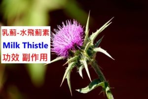 milk-thistle-benefits-side-effects