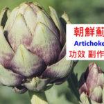 朝鮮薊的5種功效及副作用(6點使用禁忌請小心)