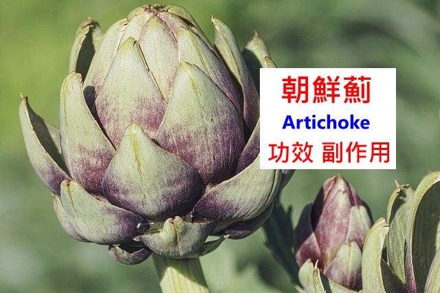 artichoke-benefits-side-effects