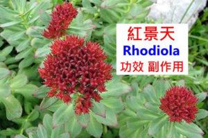 rhodiola-benefits-side-effects